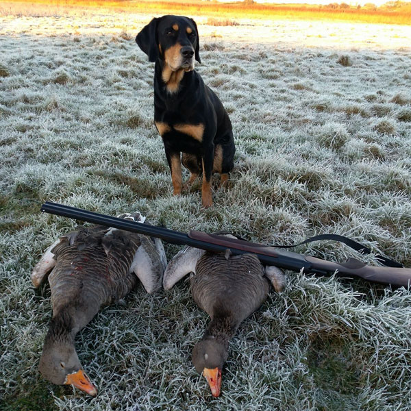Goose hunting